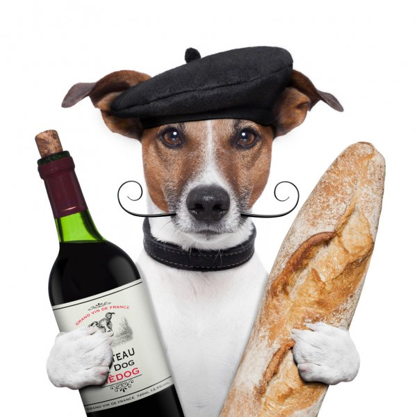 depositphotos 12757496 stock photo french dog wine baguete beret